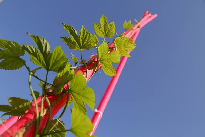 Wie pflanzen den raum erobern sukkulenten sammlung for Raum pflanzen